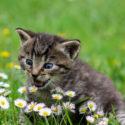 3 příznaky u koček, na které si dávejte pozor!