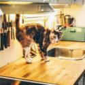 Jak správně vybrat digestoř do profesionální kuchyně