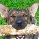 Jak vycvičit psa pomocí elektronického obojku?