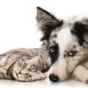 Krematorium pro zvířata: Poslední důstojné rozloučení se zvířecím kamarádem