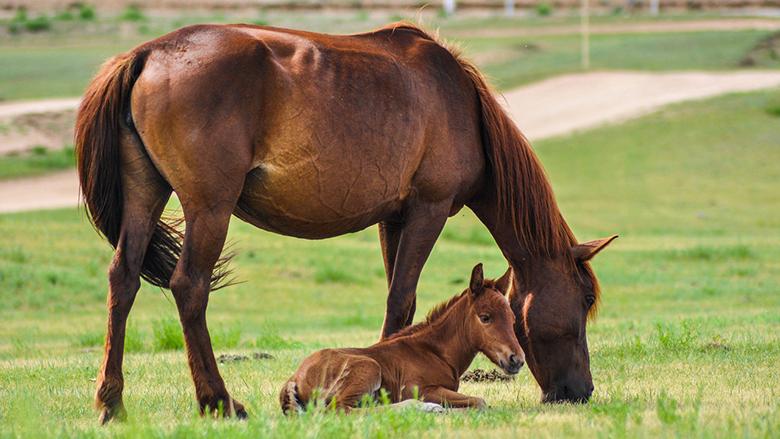 Fotografie:krmiva pro koně